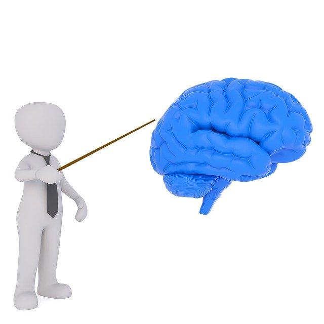 Hirnforschung beim Lesen nutzen