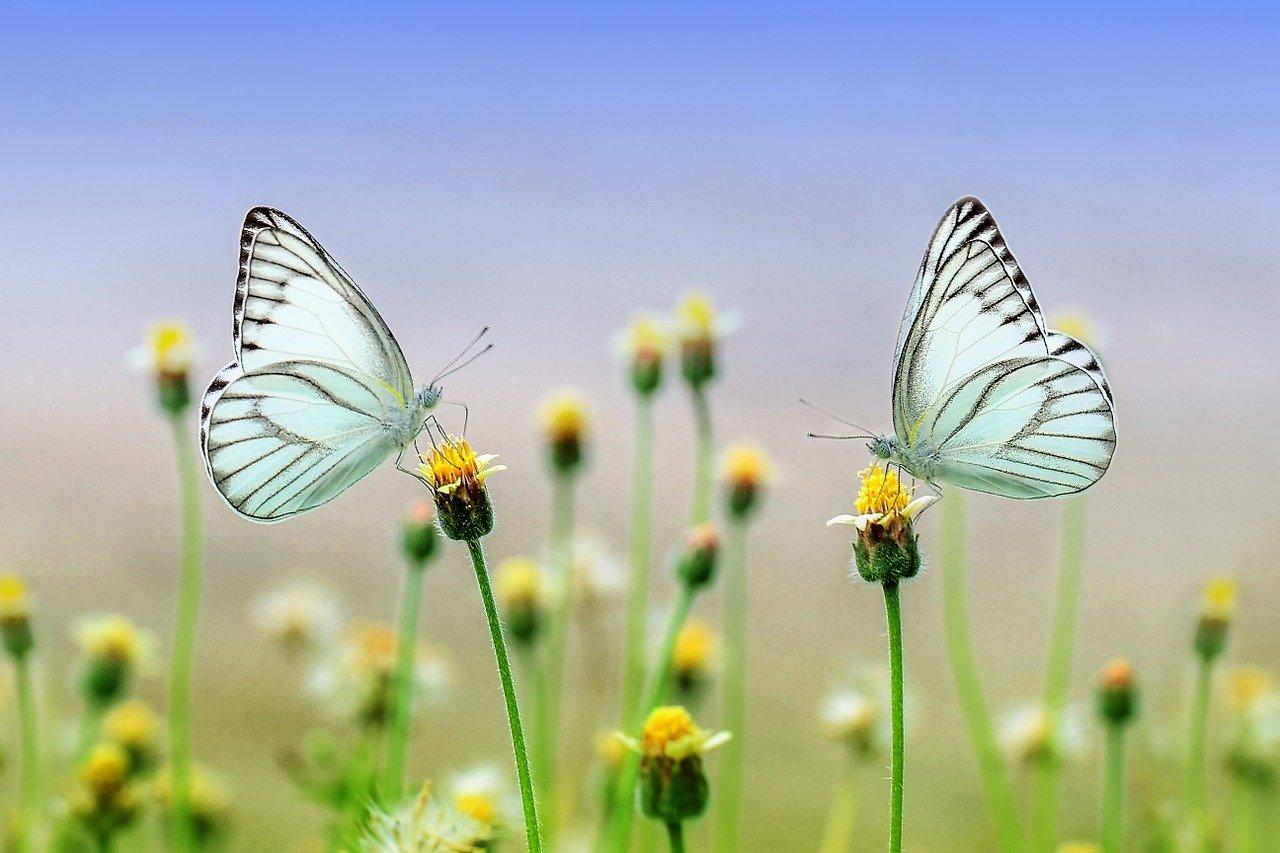 Tony Buzan liebte die Natur