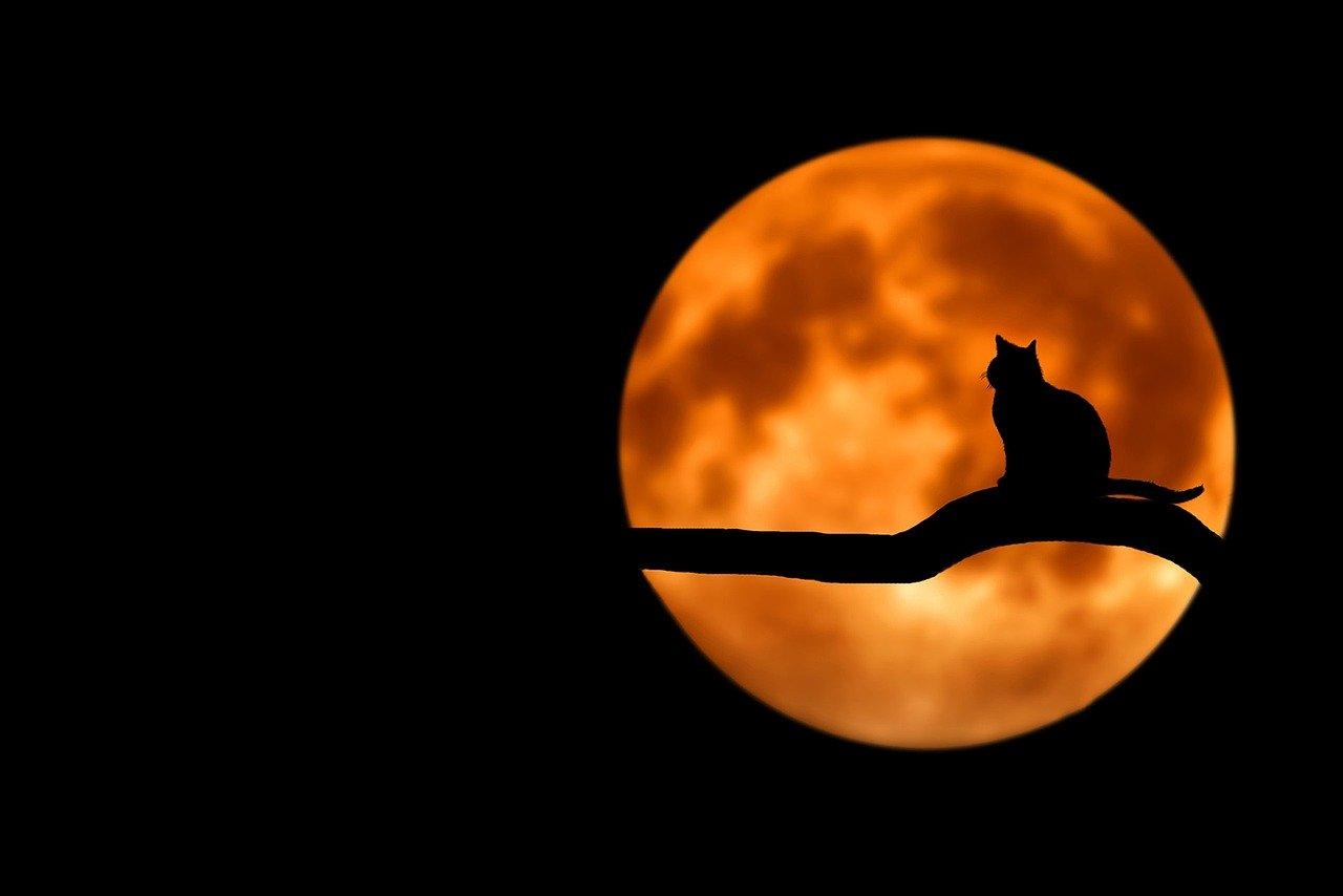 Der magische Mond